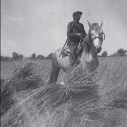 foto 15 250x250 - Малоизвестные фотографии Украины 1920-30-х годов