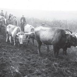 foto 19 250x250 - Малоизвестные фотографии Украины 1920-30-х годов