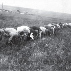 foto 21 250x250 - Малоизвестные фотографии Украины 1920-30-х годов