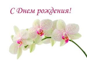 Елена Ковалева (Ногина), день рождения