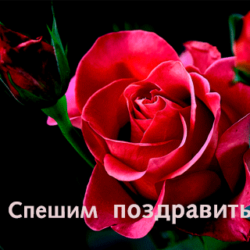 Елена Волобуева (Демченко), с днём рождения!